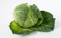 GB Cabbage